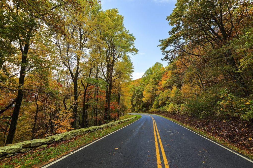 asphalt-autumn-beauty-237018